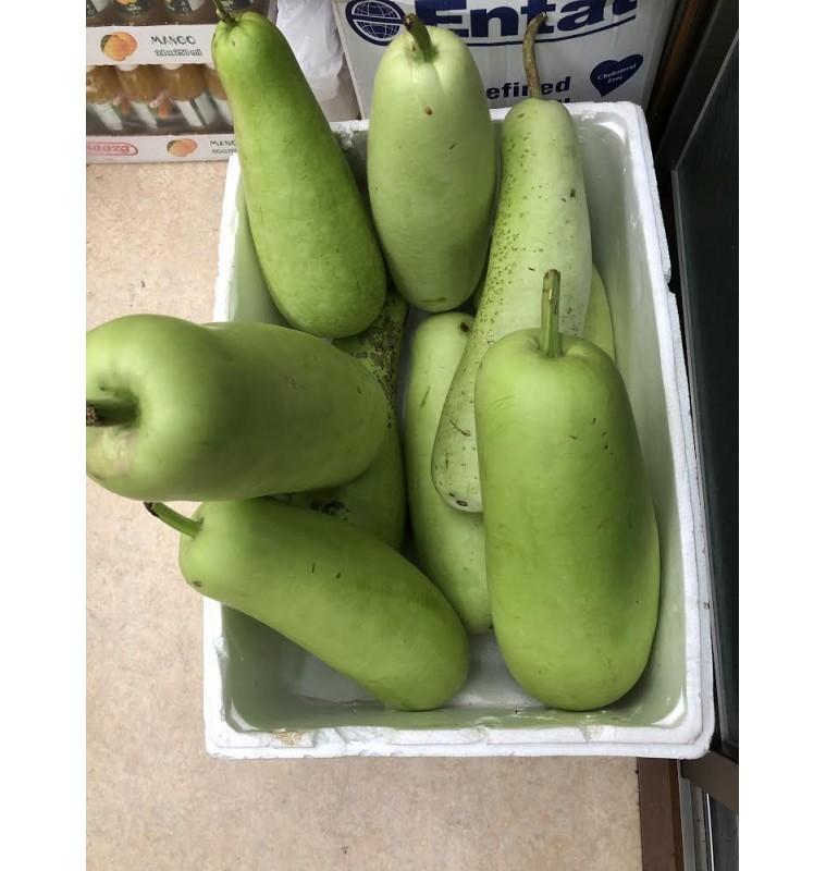 Gourd / Lau (Fresh)