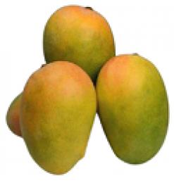 Ripened Mango / Paka Mango/ Yellow Mango