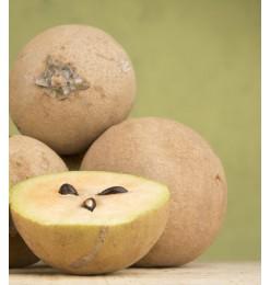 Sabeda/ Sapota Fruit