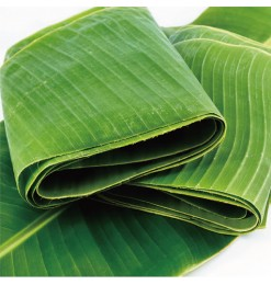 Banana Leaf (230-250gm)