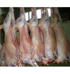 Lamb Carcass / Whole Lamb: 12-13 kg (Australia/Argentina)