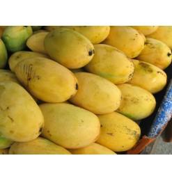 Mango Ripened